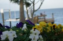 Coquina - Garden and dock